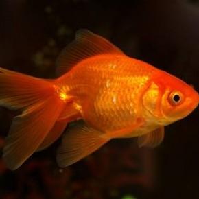 Knihovní výlet na akvaristickou burzu - nákup nových rybiček do Knihovny Průhonice