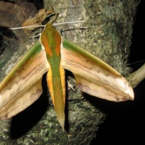 S Knihovnou za tropickými motýli do Troji